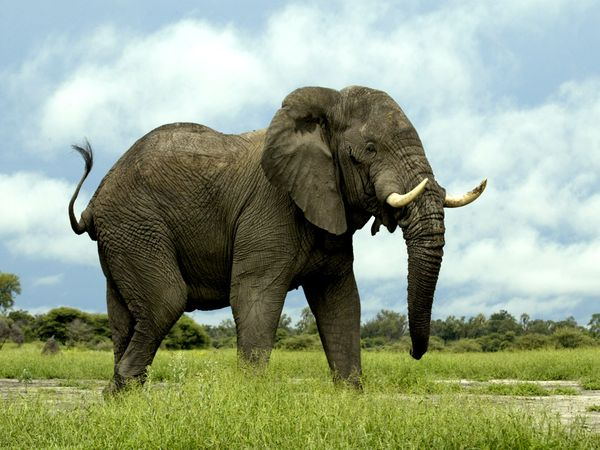 elefantul_radiovesteabuna