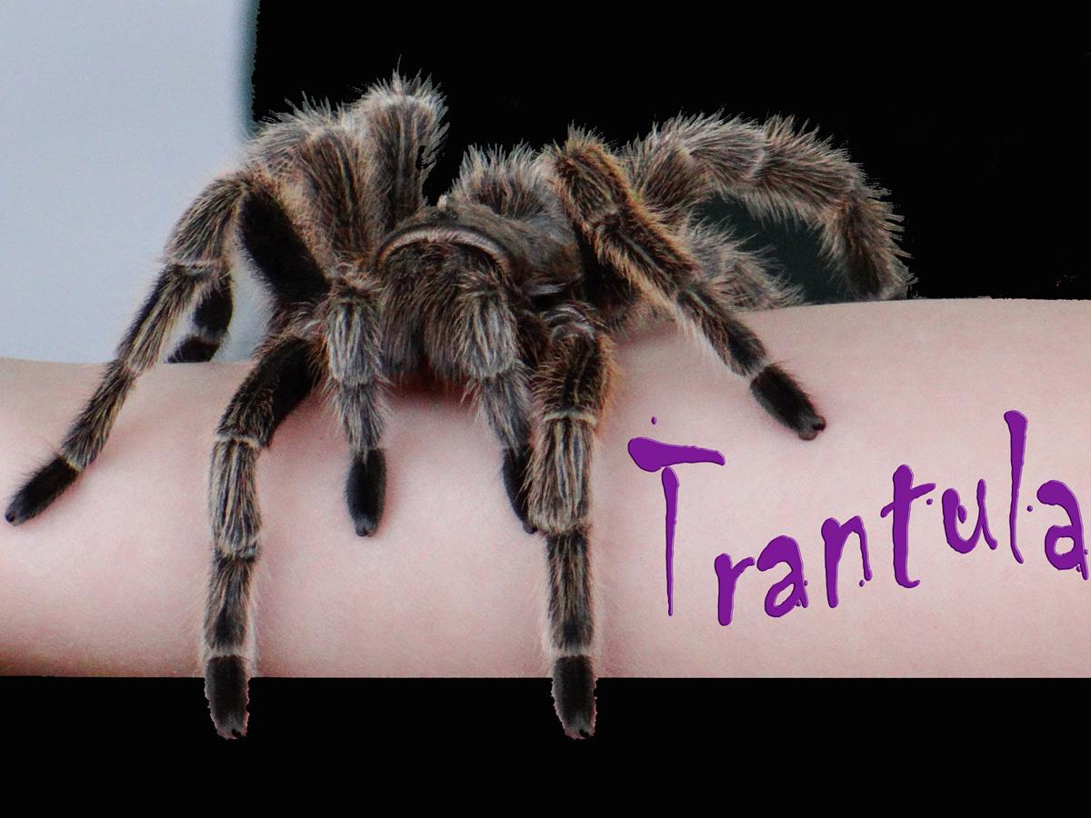 tarantula_radiovesteabuna