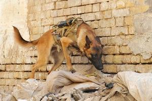 trained_dogs